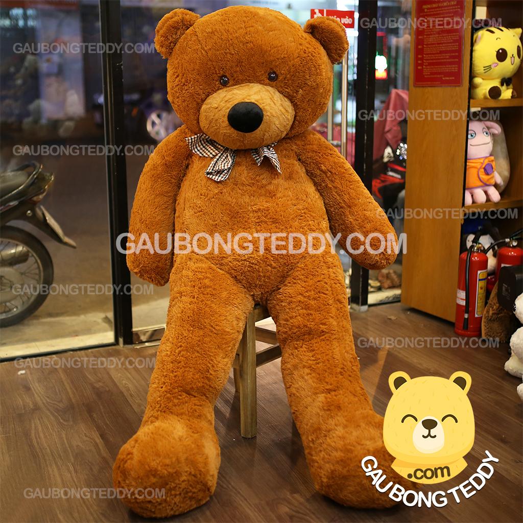Gấu Teddy Boydz