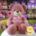 Gấu Teddy lông xoắn Angel Hồng